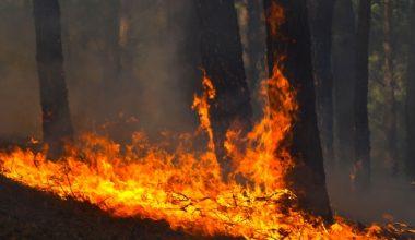 Incendios forestales: ¿se puede prevenir una catástrofe?