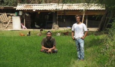Animales felices: Emprendedores UAI apuestan por huevos de gallinas libres a precios justos