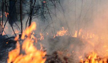 Una mirada desde la ciencia a los incendios de Valparaíso