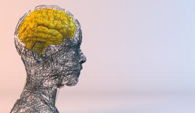 El valor de la complejidad: Doctorado en Neurociencias Sociales y Cognición