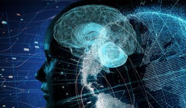Ciberciudadanía y neurociencias