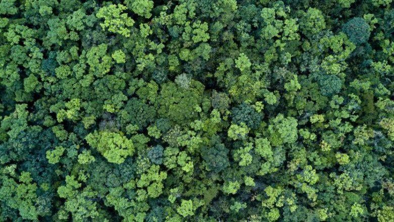 Día del Medio Ambiente:  ¿Por qué debemos transformar nuestra relación con la naturaleza?